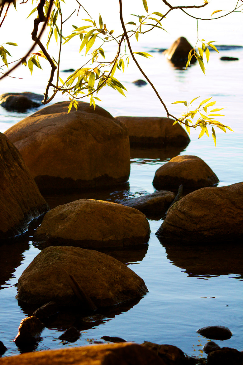 Photograph Stepping Stones by Michelle Sypult on 500px
