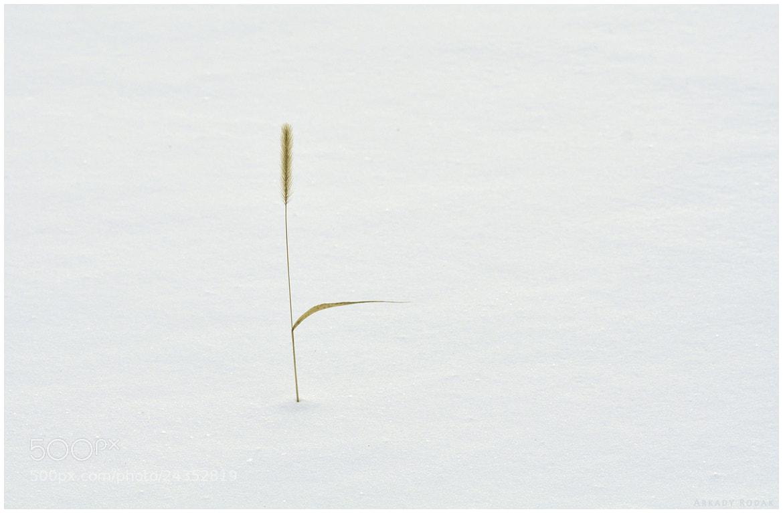 Photograph Moment of stilness. by Arkady Rodak on 500px
