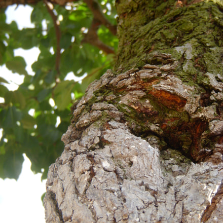 Nature Touch, Nikon COOLPIX S51