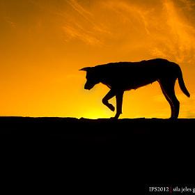 Pet by Imran Kadir (imrankadir)) on 500px.com