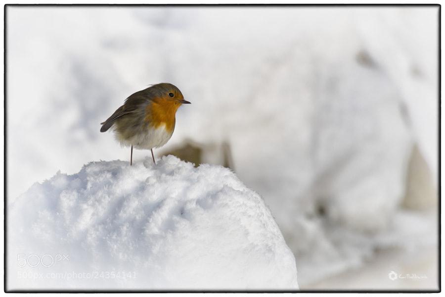 Photograph Wintertime ! by Kai Buddensiek on 500px