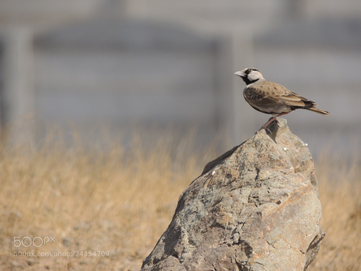 Photograph Sparrow by Parth Parmar on 500px