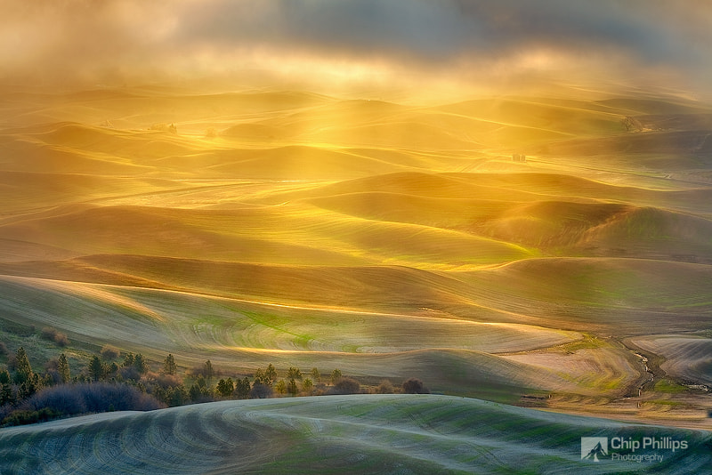Photograph Golden Light Palouse by Chip Phillips on 500px