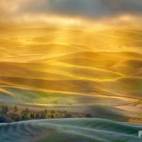 Golden Light Palouse