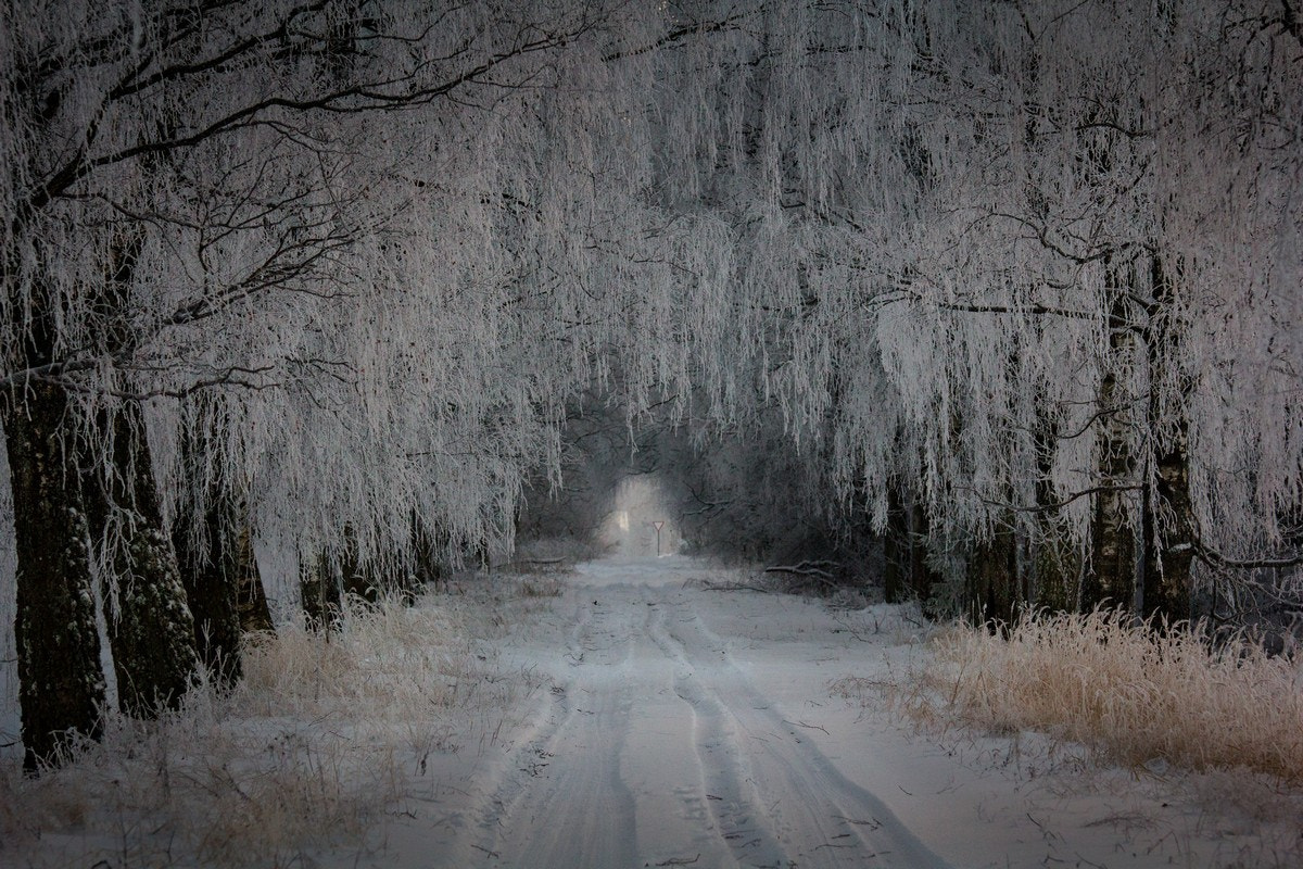 Photograph Frost tunnel by Mindaugas Macaitis on 500px