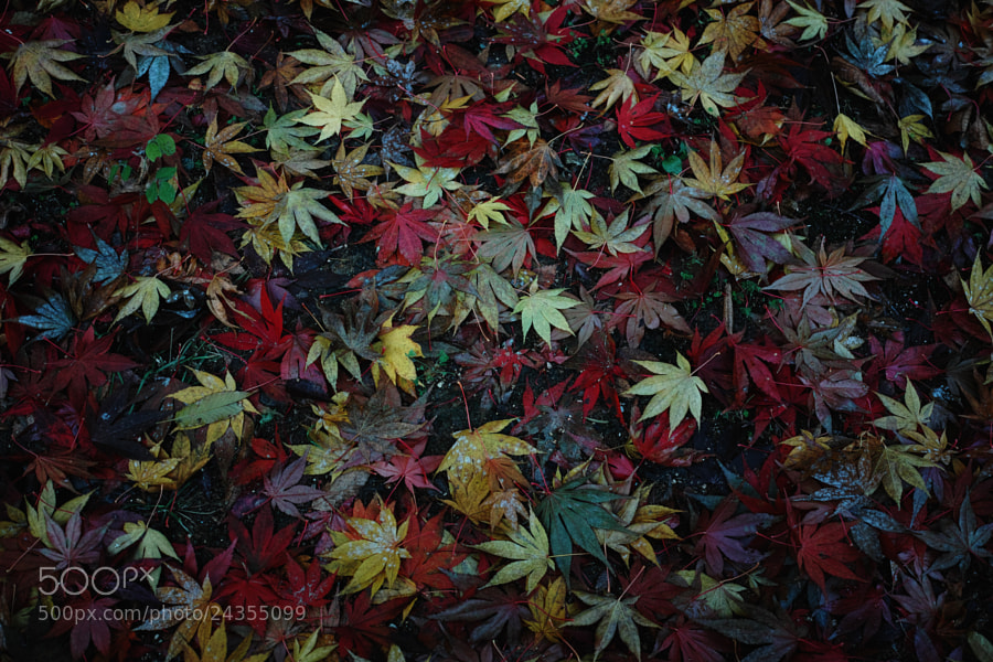 Photograph Autumn Leaves by Dongseon Lee on 500px