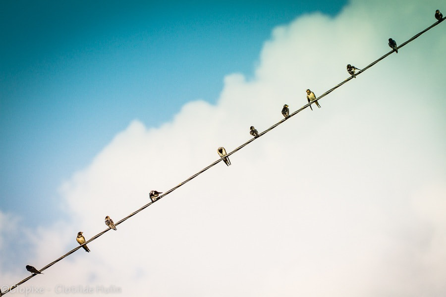Photograph Swallows by Clotilde Hulin on 500px