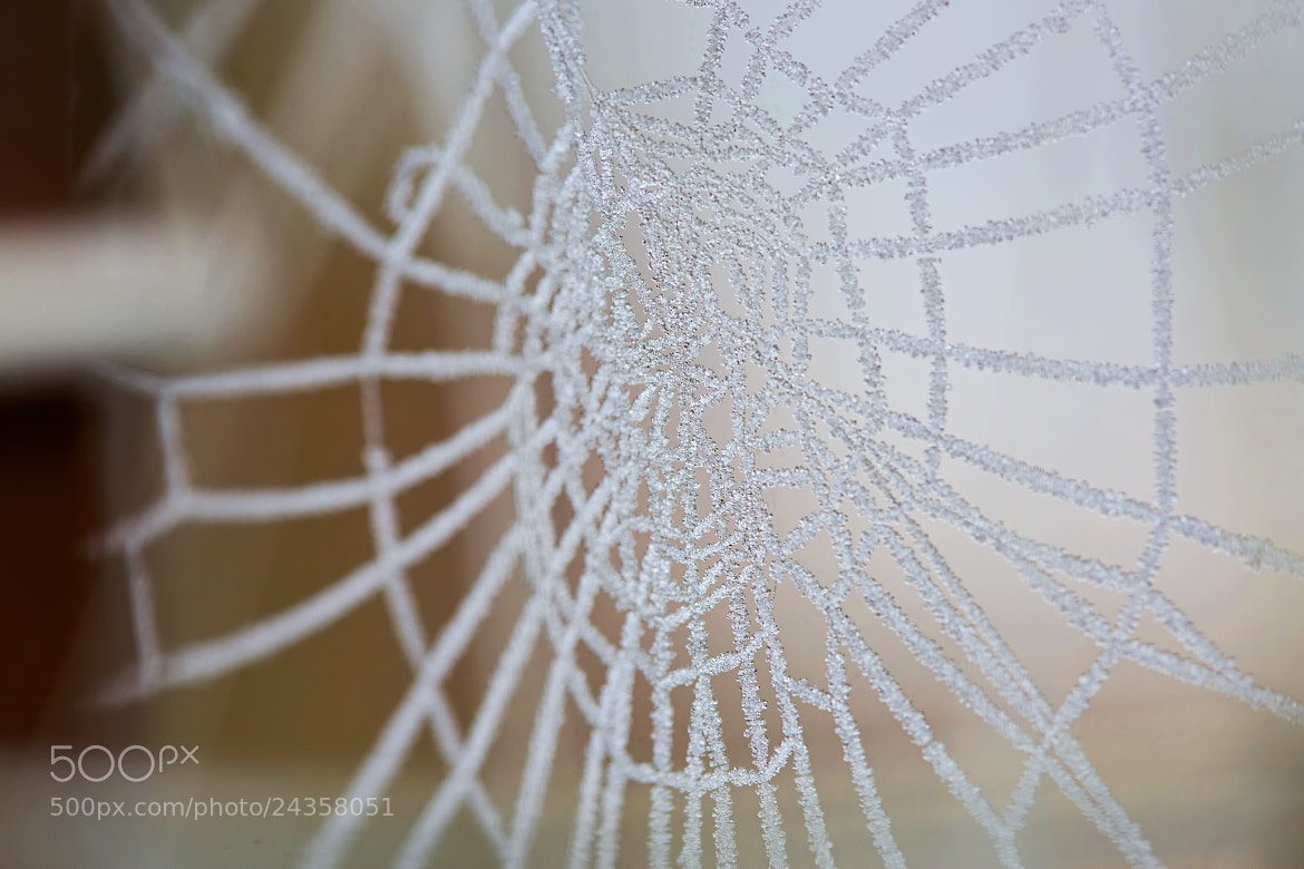 Photograph Obsession for Details by Renae Smith on 500px