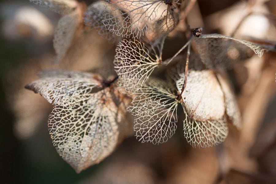 Fleurs d'hiver (Winter flowers) de Christine Druesne sur 500px.com