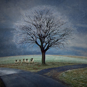 at the crossroads by Birgit Pittelkow (BirgitPittelkow)) on 500px.com