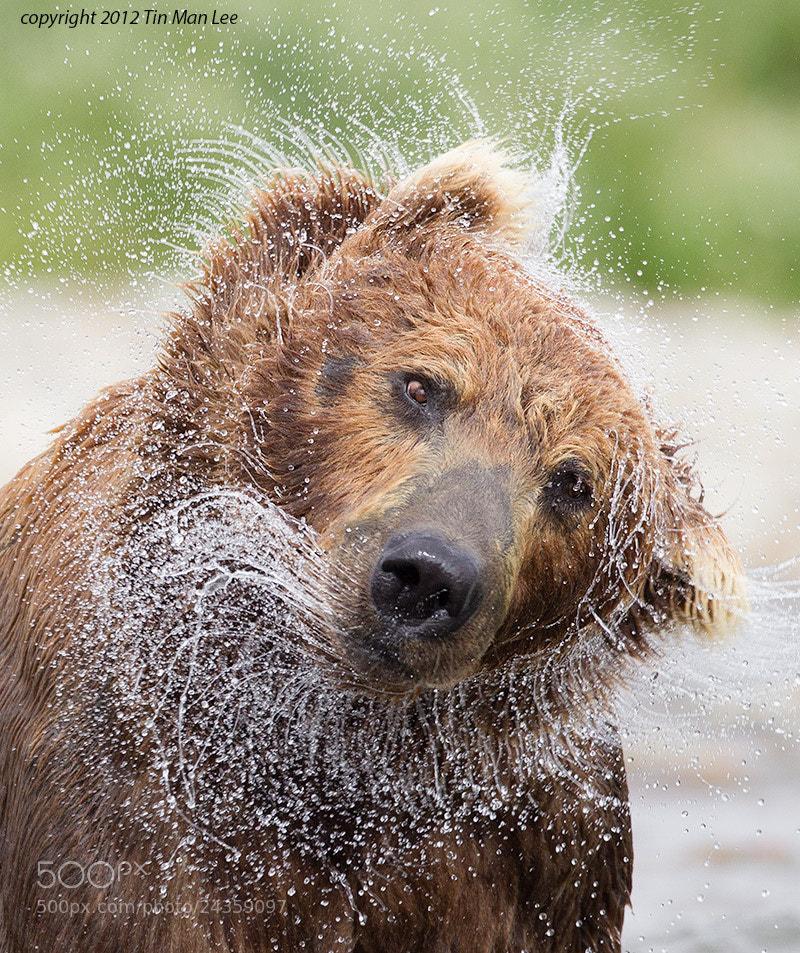 Photograph Bear Shake by Tin Man on 500px