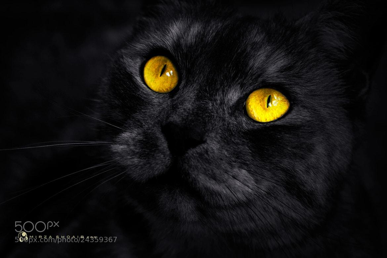 Photograph O_O by shoaib  on 500px