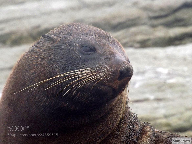 Photograph seal by Sam  Pratt on 500px
