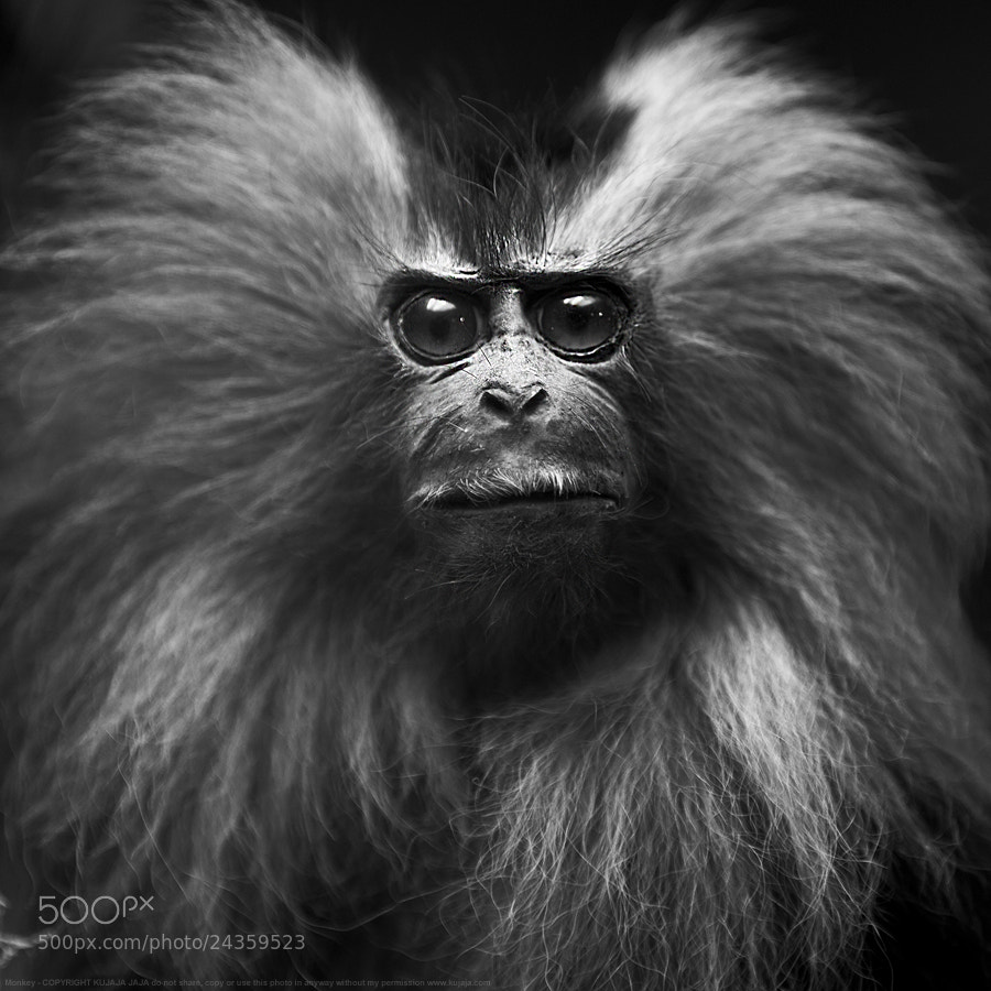 Photograph Funky monkey by K J on 500px
