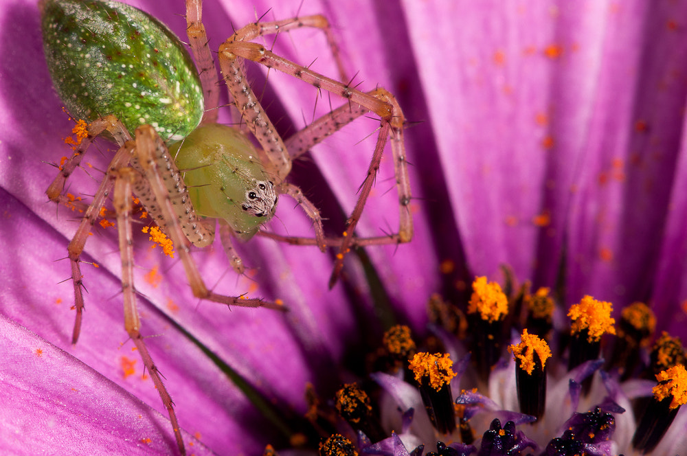 Photograph Green spider by guidodelgiudice on 500px