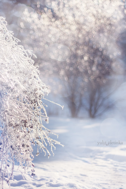 Photograph tinkling winter II by Yulia Pletinka on 500px