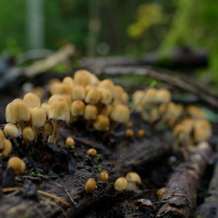 these are some mushrooms, Nikon D3100, Tamron SP 35mm f/1.8 VC