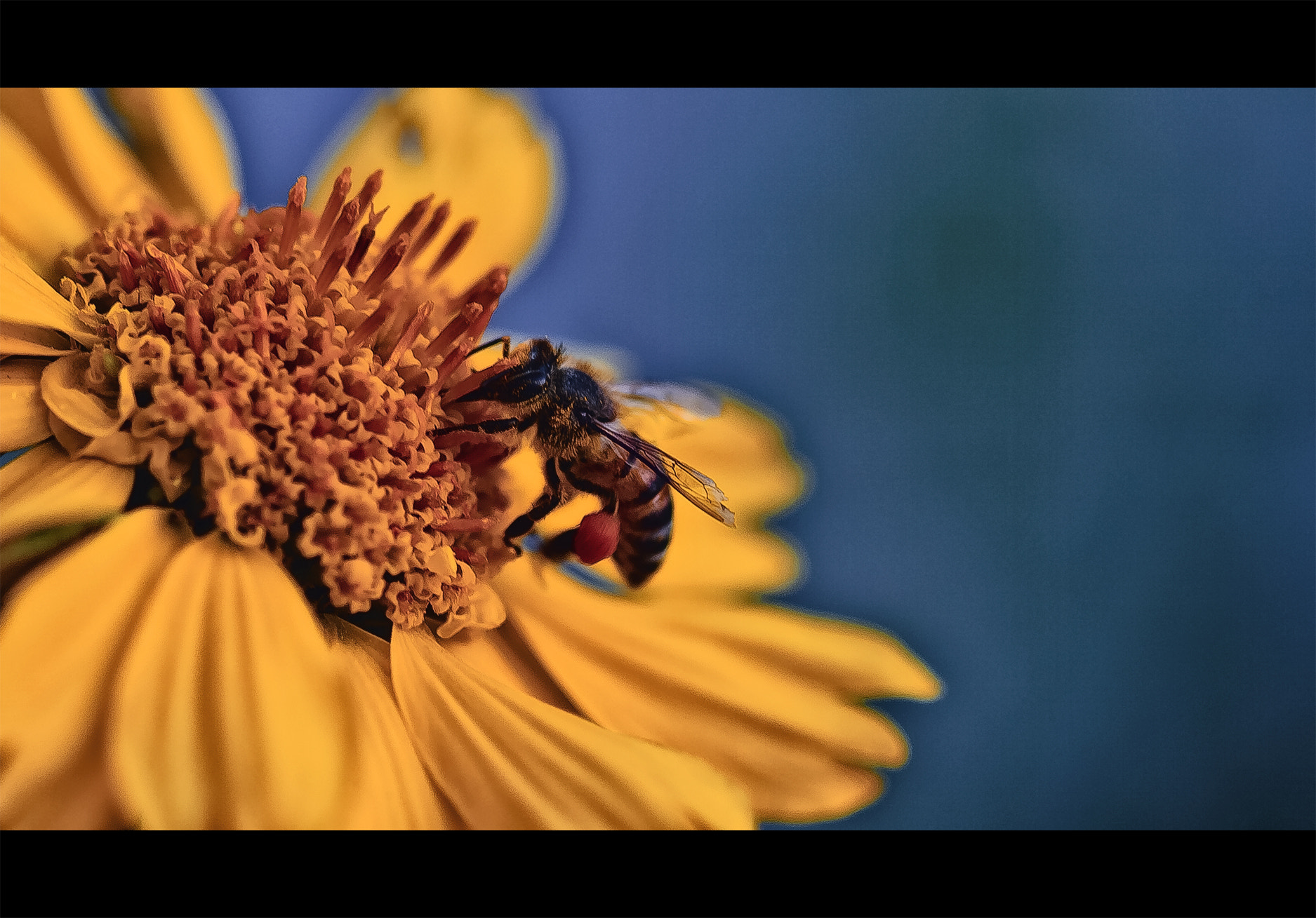 Photograph bee by SuLTaN AbdullaH on 500px