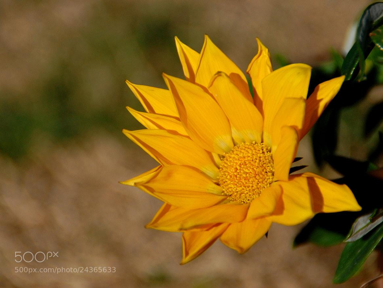 Photograph feelings of yellow by Andrea Macherelli Bianchini on 500px