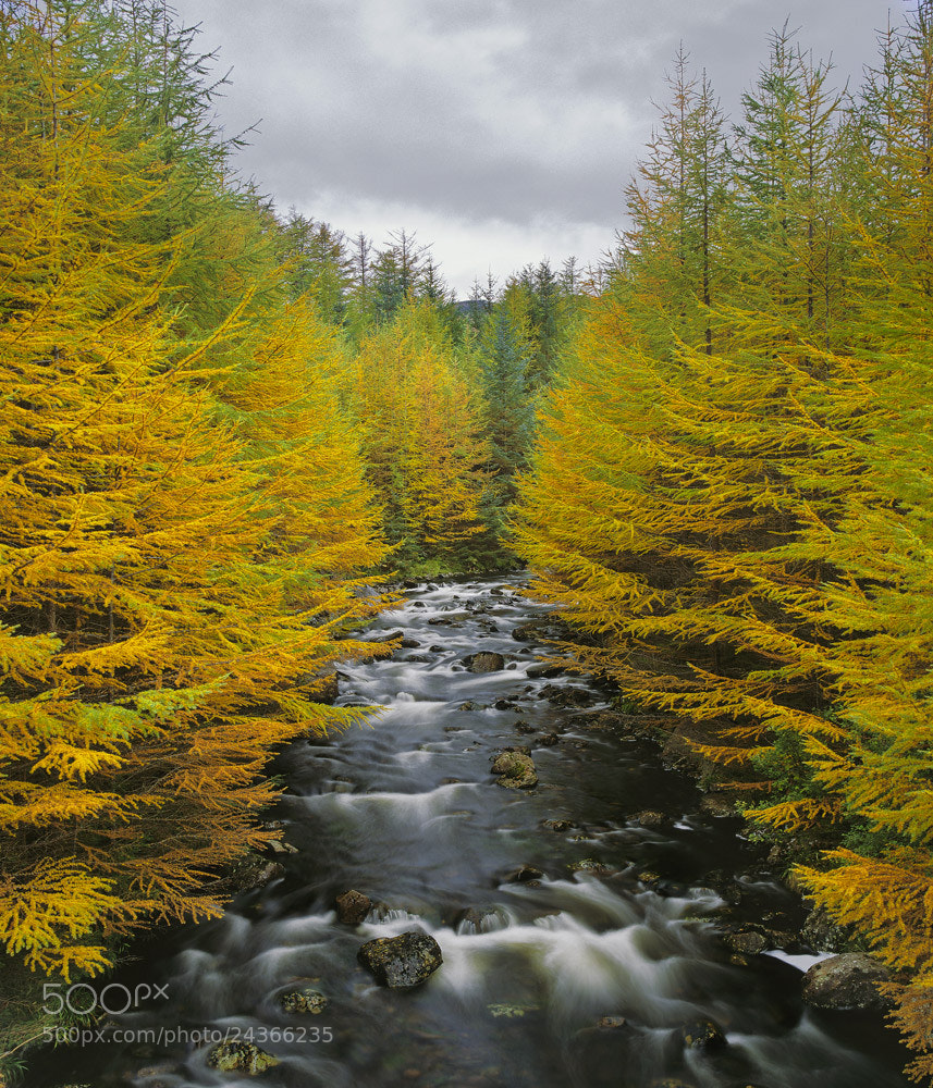 Photograph Larch Corridor by Ian Cameron on 500px