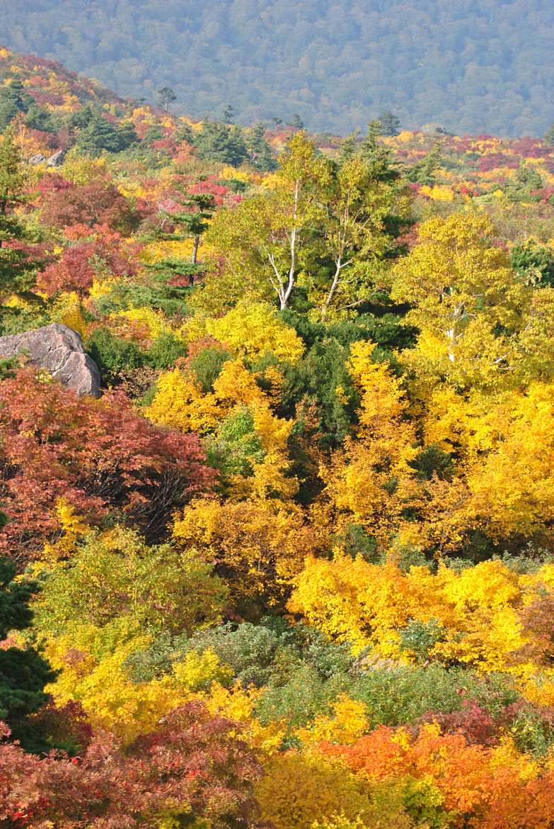 Photograph colorful autumn by Nezuko  on 500px
