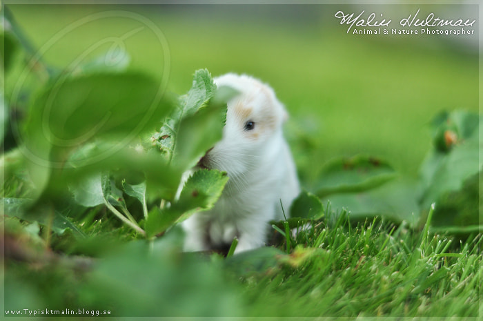 Photograph Rabbit baby by Malin Hultman on 500px