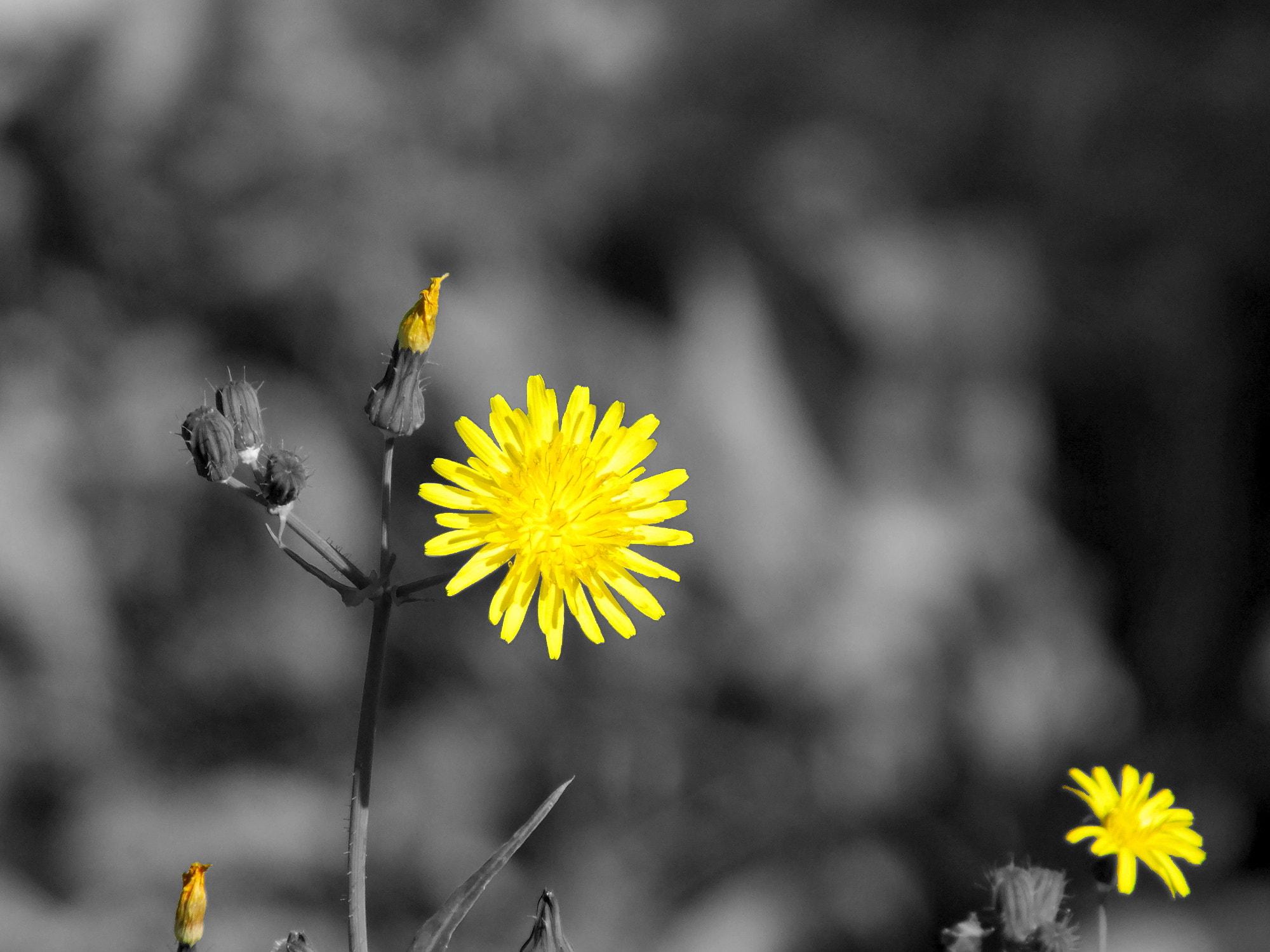 Photograph Yellow by Fabian Spiteri on 500px