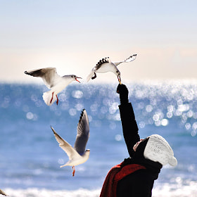 commune with seagull by choi go eun (lts11119)) on 500px.com