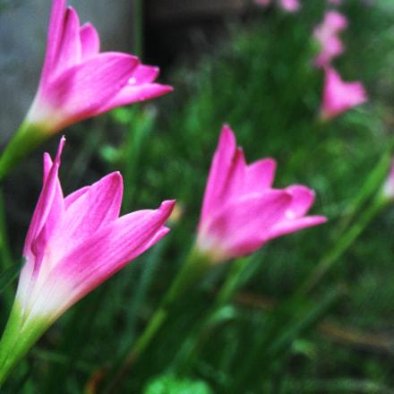 Flower Garden, Fujifilm FinePix Z90