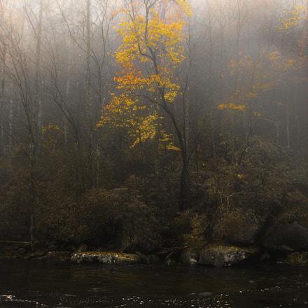 Golden Fog, Canon POWERSHOT SD630