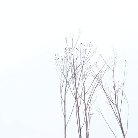 IMG_8444.JPG, Canon EOS REBEL T3I, Canon EF 24-85mm f/3.5-4.5 USM