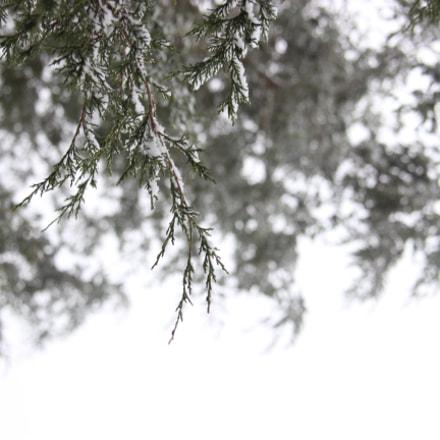 IMG_8387.JPG, Canon EOS REBEL T3I, Canon EF 24-85mm f/3.5-4.5 USM