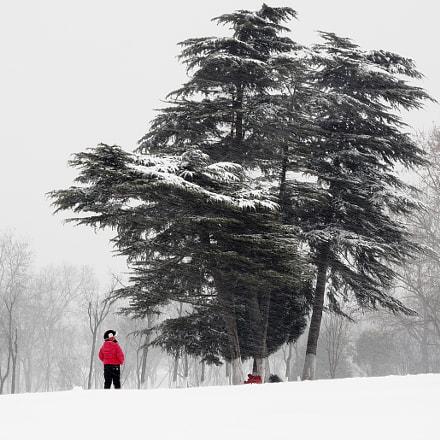 雪、树、小朋友, Canon EOS 5DS R, Canon EF 28-70mm f/3.5-4.5
