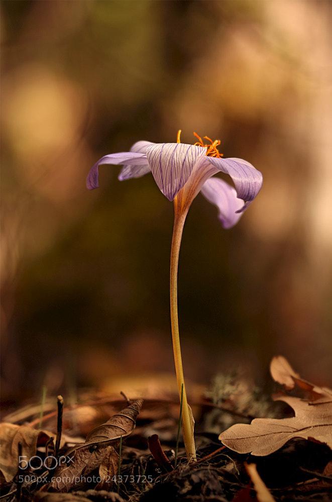 Photograph Be single by Roman Rys on 500px