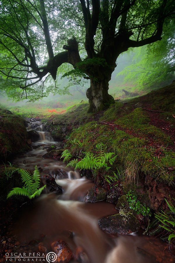 Photograph - Secrets of the forest - by Oscar  Peña on 500px