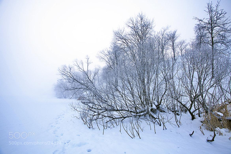 Photograph Winter fog by Denis Belyaev on 500px