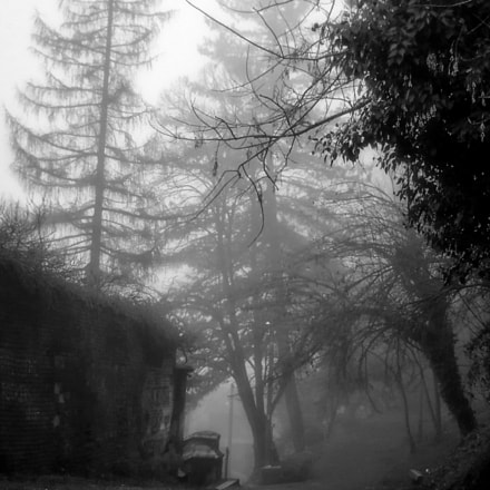 Fog in the park, Nikon COOLPIX L19