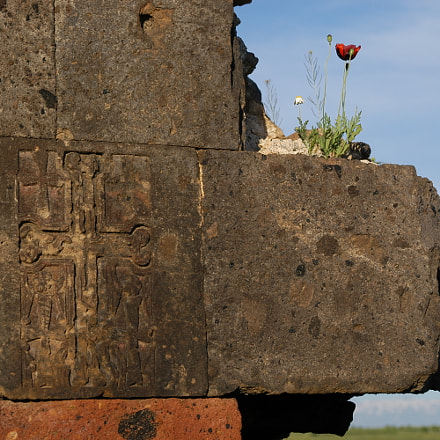 Untitled, Nikon D100, AF Zoom-Nikkor 28-105mm f/3.5-4.5D IF