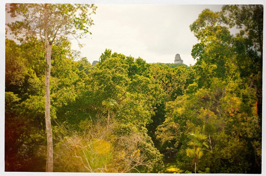 Tikal by Cattiva Kat on 500px.com
