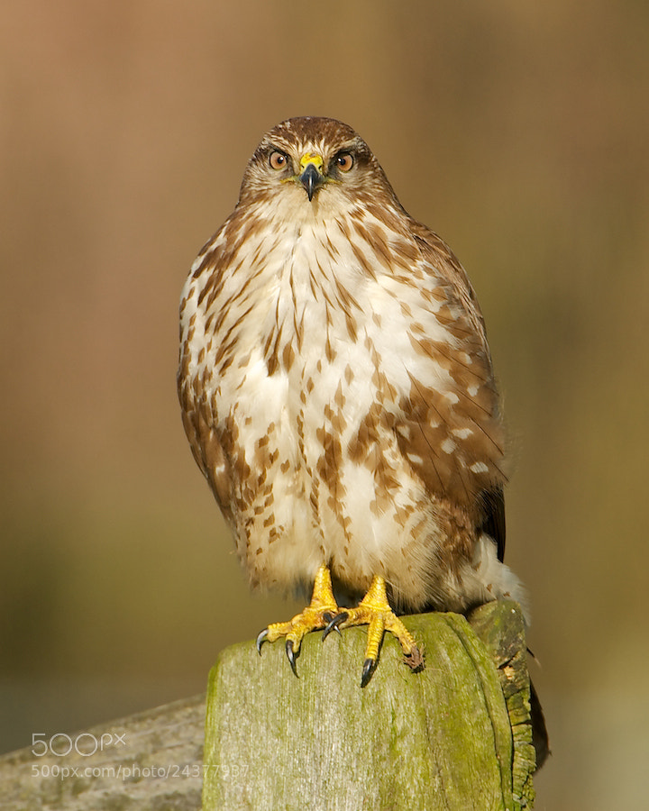 Photograph Are you looking at me? by Erik Veldkamp on 500px