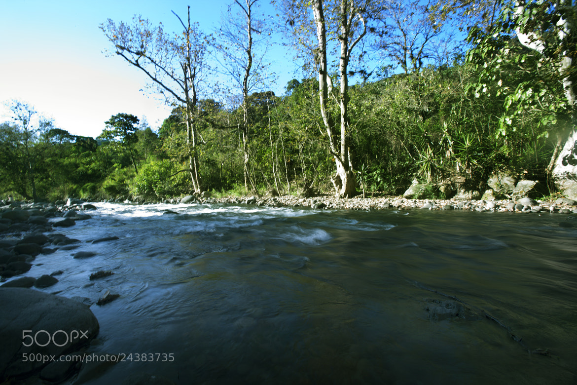 Photograph Forest and river by Cristobal Garciaferro Rubio on 500px
