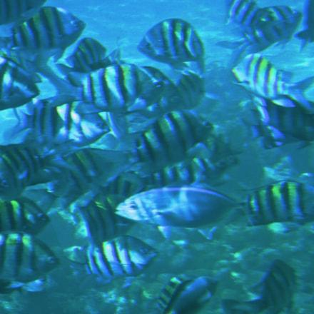 School of Fish, Nikon COOLPIX S8100