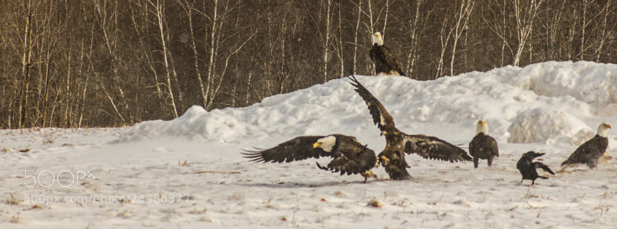 Fight for the food by DavidFulde ) on 500px.com
