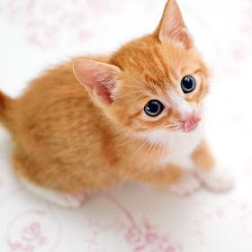 cute by SAIK KIM (saik)) on 500px.com