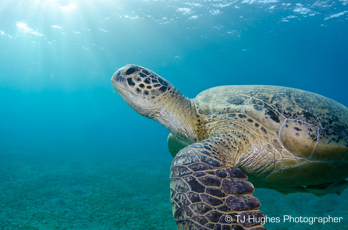 Photograph Turtle by TJ Hughes on 500px