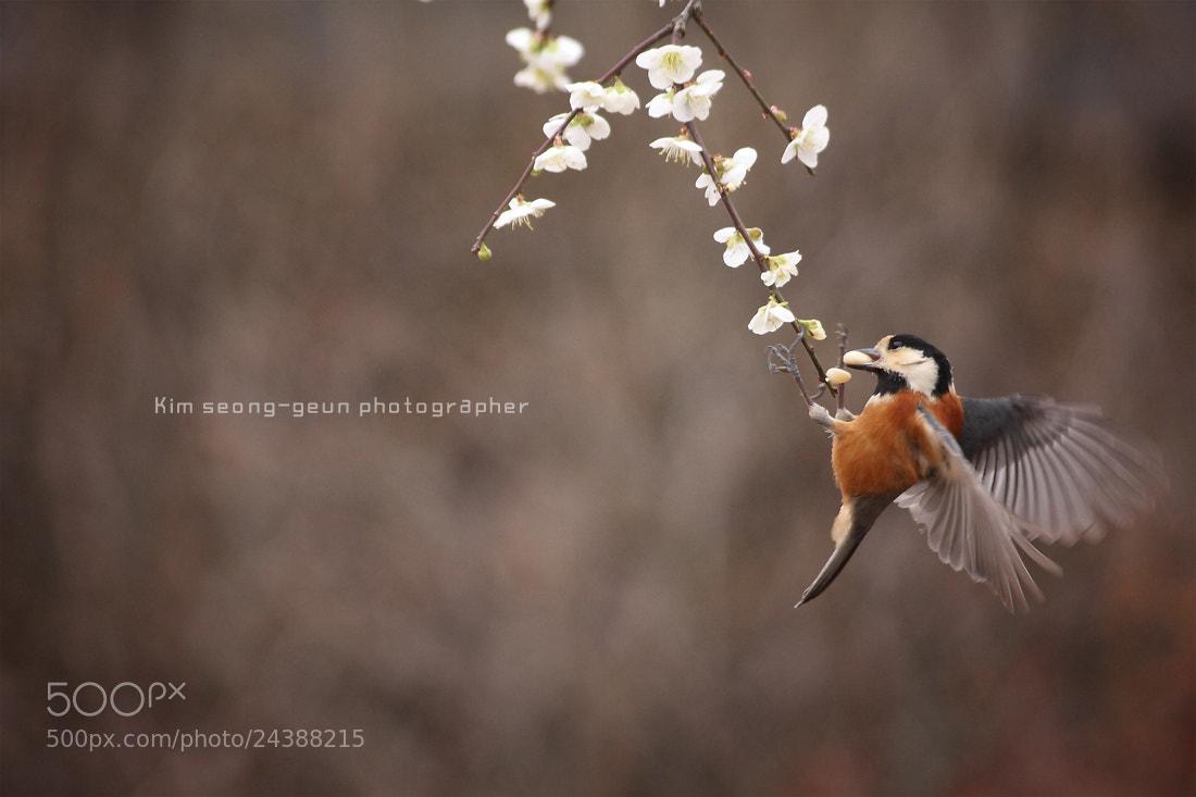 Photograph Bird by kim seong-geun on 500px