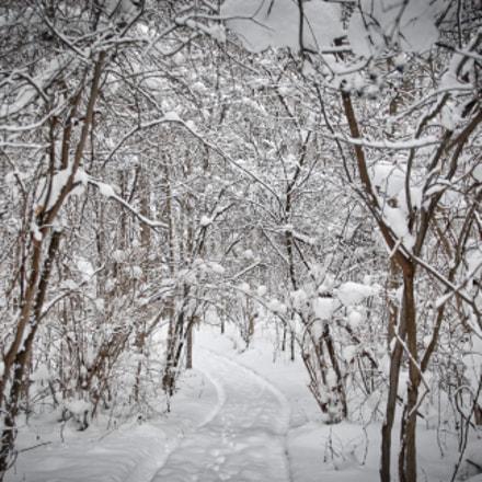 Winter Path, Nikon D200, Sigma 24-60mm F2.8 EX DG