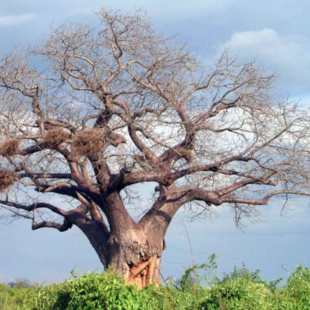 Baobab Kenia, Nikon E3700