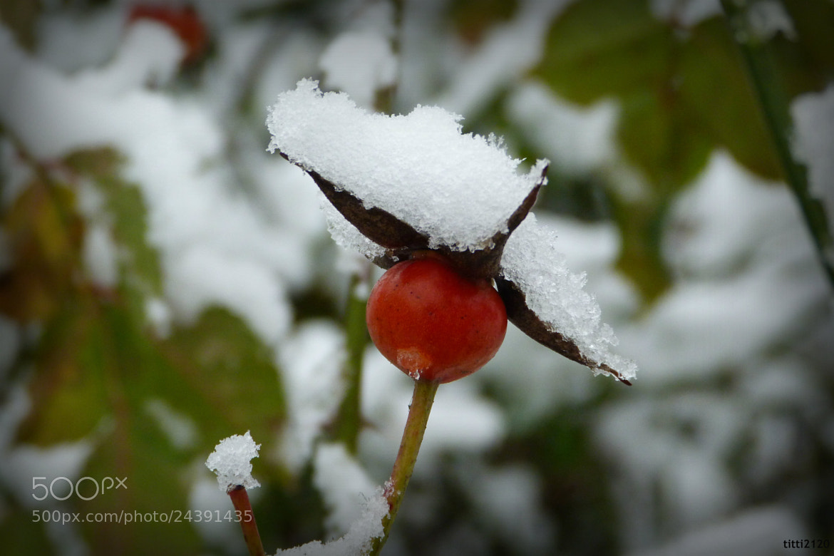 Photograph Un bianco cappello by Maria Fornaca on 500px