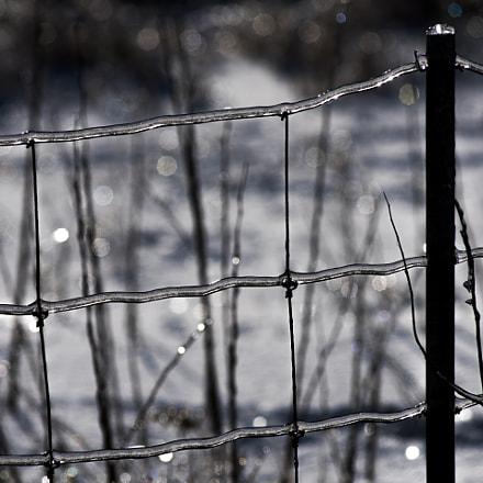 Verglas sur clôture